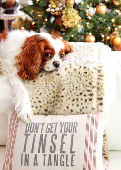 12.25.14 - Beautiful Photos of Dogs at Christmas3