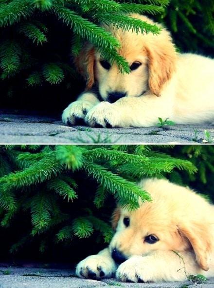 12.25.14 - Beautiful Photos of Dogs at Christmas7