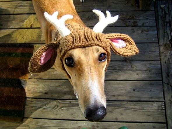 12.25.14 - Dogs Who Are SO Over Christmas1