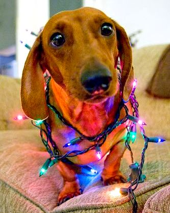 12.25.14 - Dogs Who Are SO Over Christmas12