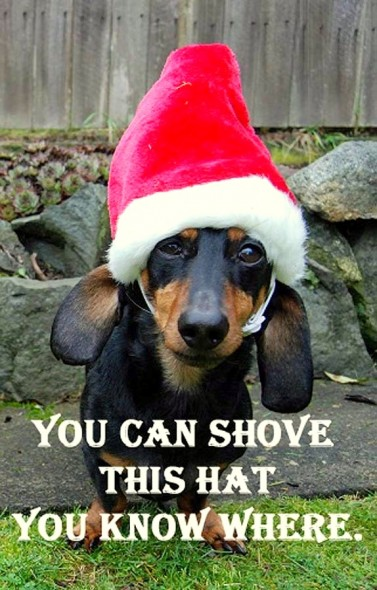 12.25.14 - Dogs Who Are SO Over Christmas14