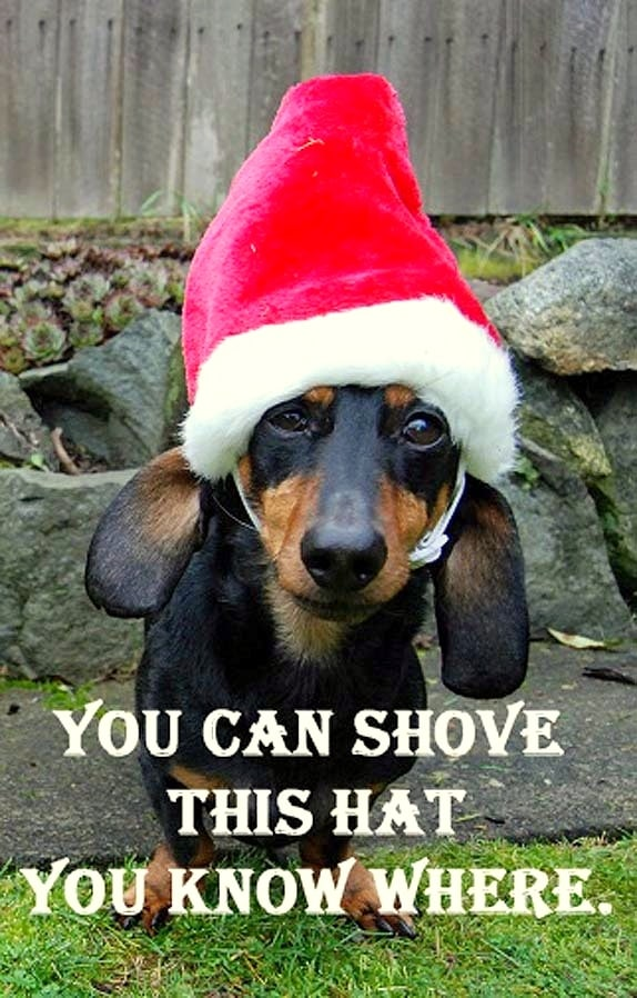Dogs Who Are So Over Christmas Life With Dogs