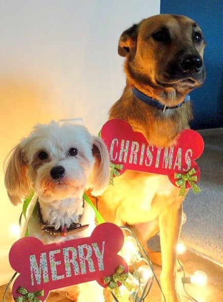 12.25.14 - Dogs Who Are SO Over Christmas18
