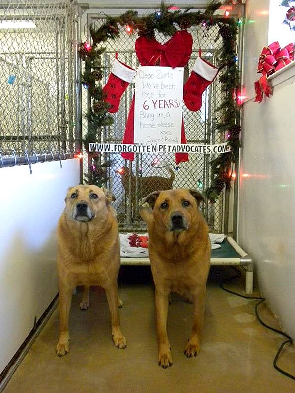 12.26.14 - Bonded Pair Adopted After EIGHT Long Years in a Shelter