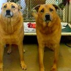 Bonded Pair Adopted After EIGHT Long Years in a Shelter