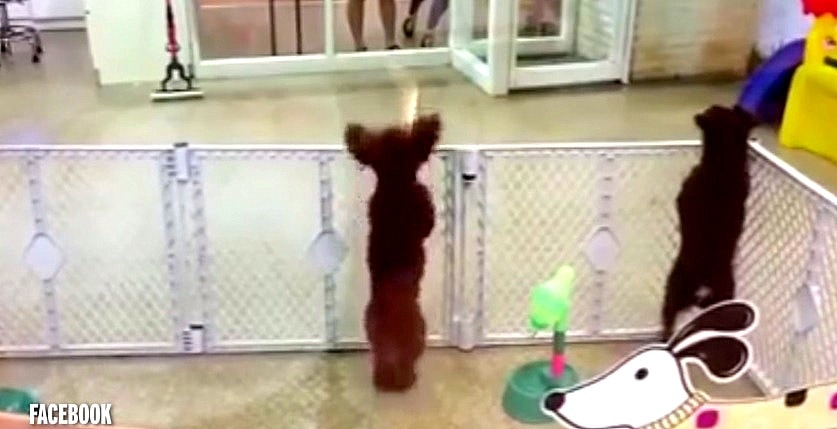 Dog Dances with Delight at Seeing Her Mom