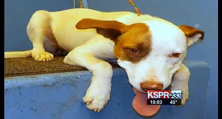 Missouri City Puts Therapy Puppy in High-Kill Shelter