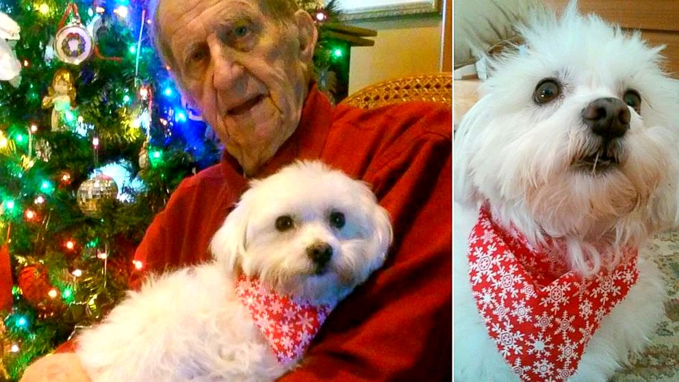 Family Says Stray Dog Helped Cure Elderly Man's Cancer