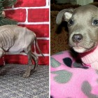 Tiny, Starved Puppy Rescued in September Is Now Thriving