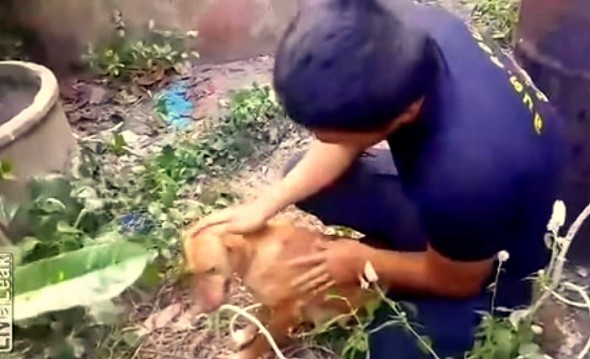 12.28.14 - Dog Grabs onto Rope to Be Pulled Out of Well2