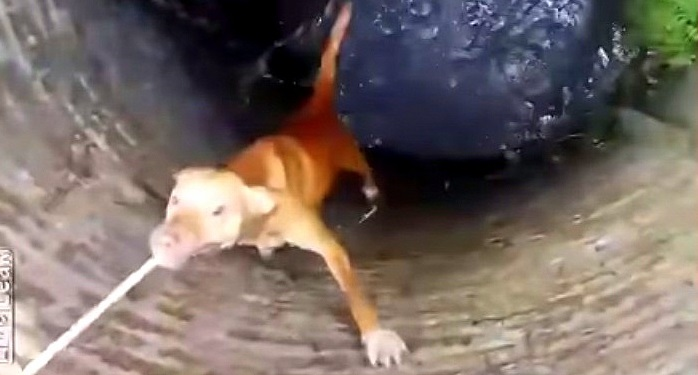 Most Amazing Rescue of Dog from Well