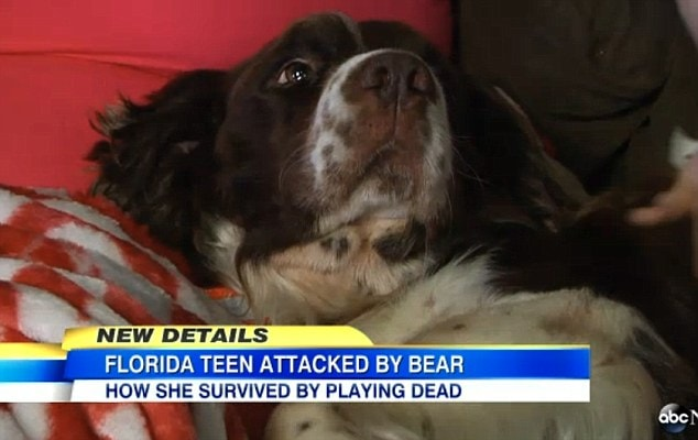 Dog Plays Dead When Walk