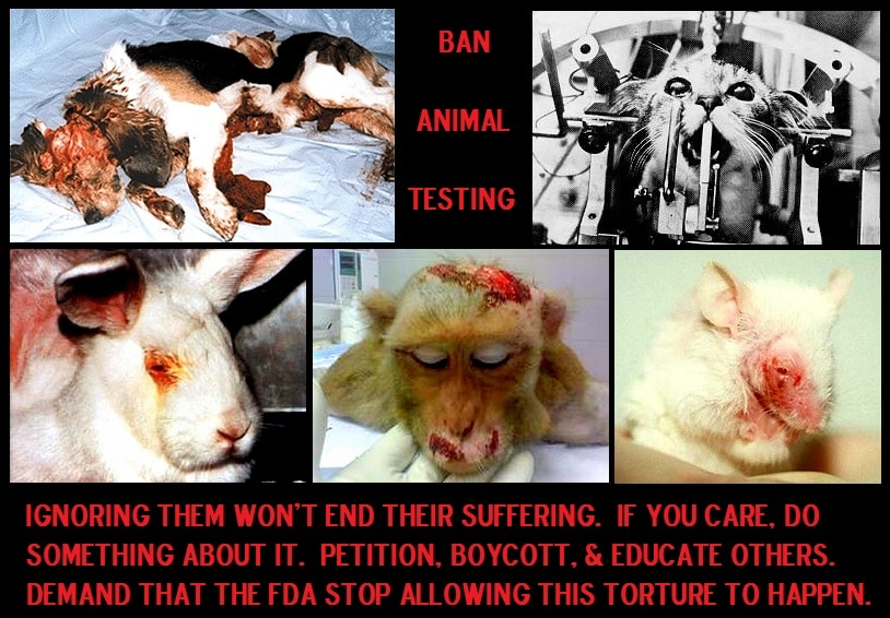let�s end testing on dogs and other animals