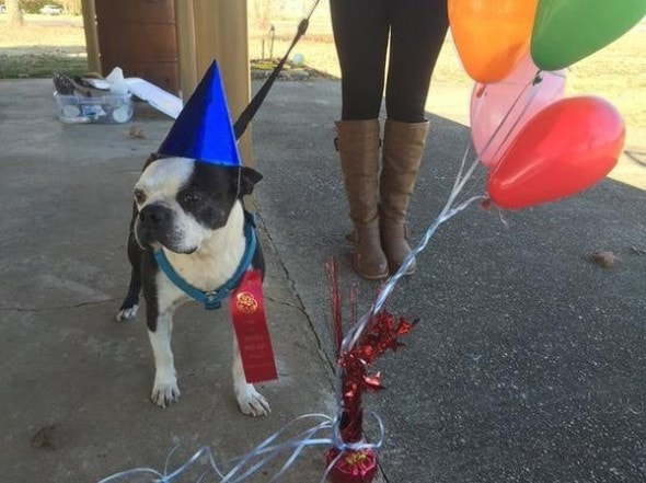 12.3.14 - Family Adopts Dying Dog to give him Best Last Days Ever2