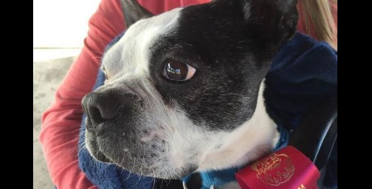 Family Adopts Dying Dog to Give Him Best Last Days Ever