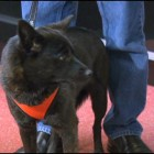 Police Officer Finds dog Believed to Be Dead