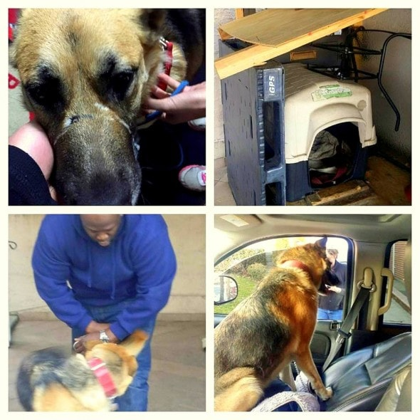 12.31.14 - Dog Muzzled for Last Two Years Finally Rescued1
