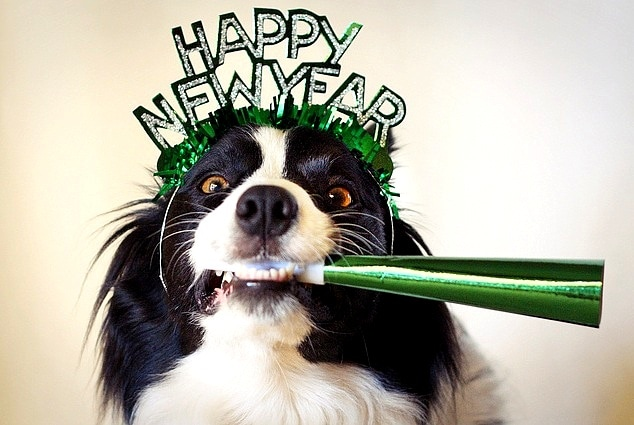 12.31.14 - New Year's Dogs1