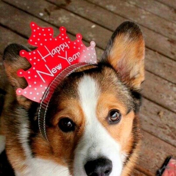 12.31.14 - New Year's Dogs15