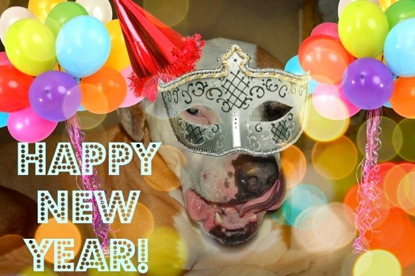 12.31.14 - New Year's Dogs17