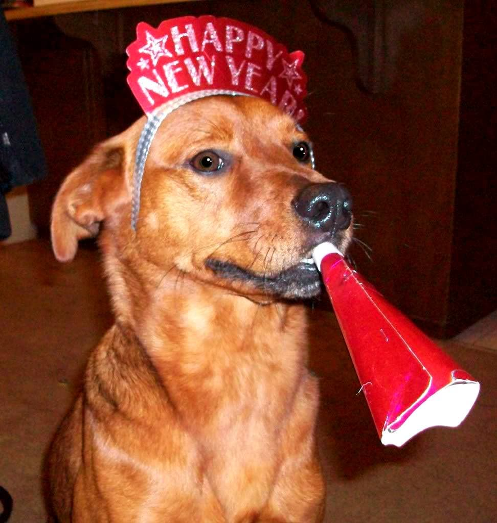 Pups Celebrating the New Year