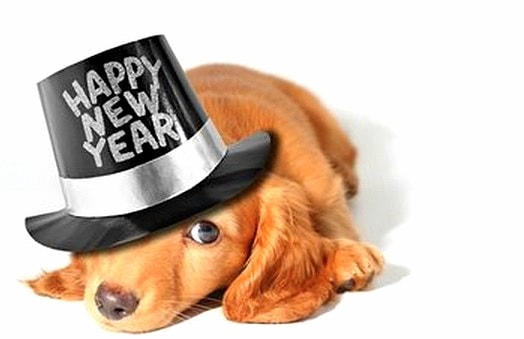 12.31.14 - New Year's Dogs3
