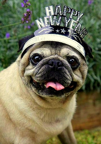 12.31.14 - New Year's Dogs4