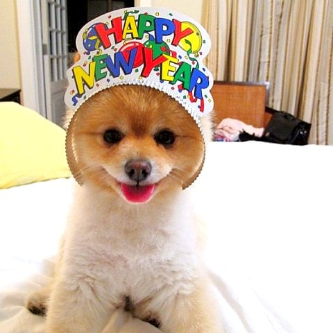 12.31.14 - New Year's Dogs6