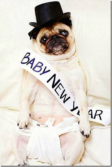 12.31.14 - New Year's Dogs7