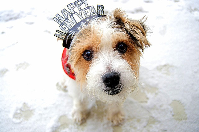 Pups Celebrating The New Year Life With Dogs