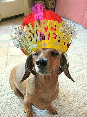 12.31.14 - New Year's Dogs9