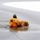 Dog Receives Heroic Rescue After Falling Through Ice
