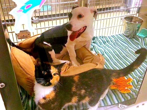 12.7.14 - Stray Dog and Cat Found Together Adopted Together1