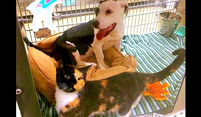 Stray Dog and Cat Found Together Adopted Together
