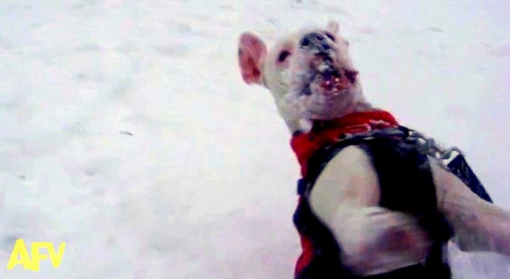 Dogs Who Are Loving Winter