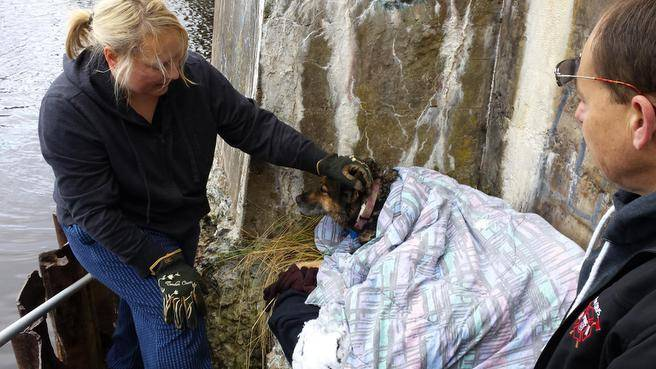 Senior Lost Pet Gets Rescued from River and Reunited with Owner