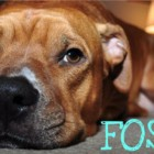 Photo Credit: http://fosteringsaveslives.org/