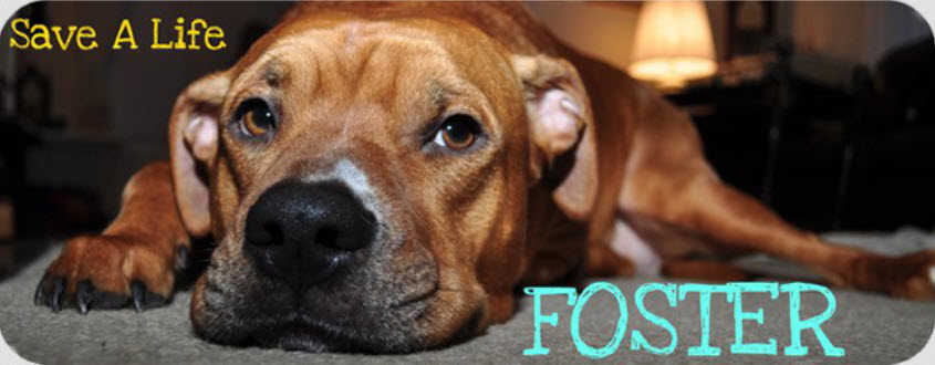Give Back, Foster a Dog for the Holidays