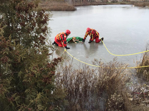 Toronto Firefighters Rescue Dog Trapped on Icy River