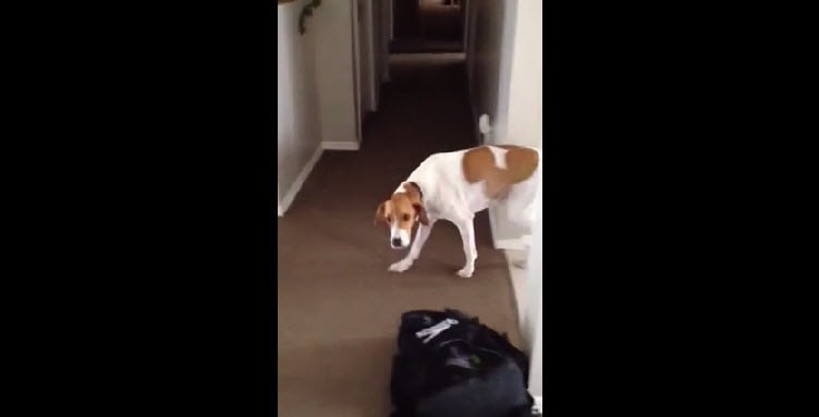 Bad Dog! Canine Food Thief Gets Caught