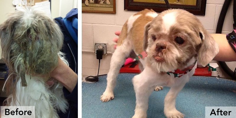 Mistletoe The Matted Dog Gets New Haircut