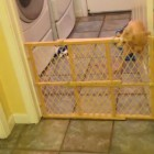 The Eight-Week-Old Escape Artist