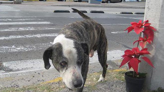 Deceased Homeless Man's Dog Continues to Look for Dead Owner