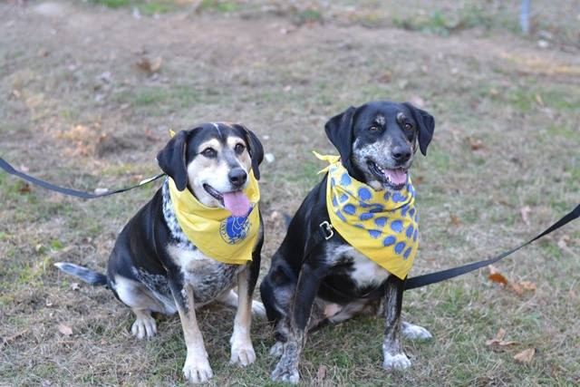 Bella (right) and Panda (left). Photo Credit: Rescue 2 Restore.