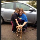 Stolen Staffie Comes Home In Time for Christmas