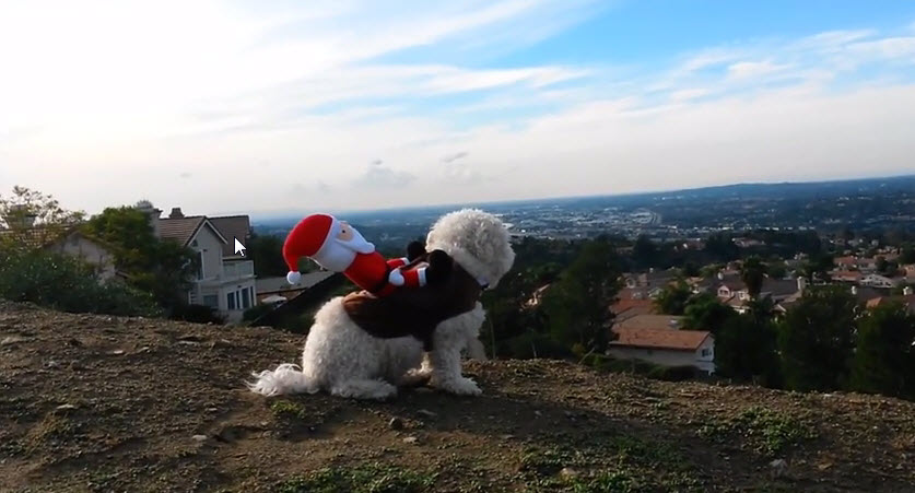 Dog Helps Santa (Secret Footage)