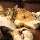Photos: Canine and Feline Best Friends