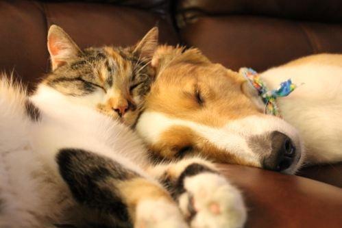 Photos: Canine and Feline Best Friends