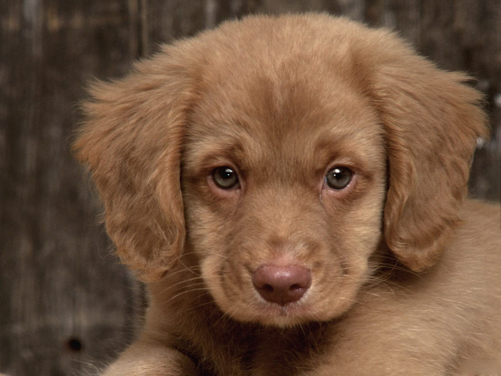 Top 10 puppy names for 2014