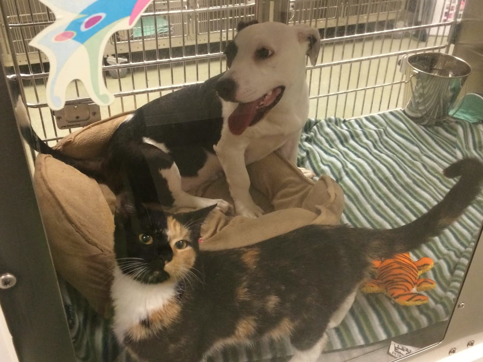 Dog and cat best friends are found together as strays